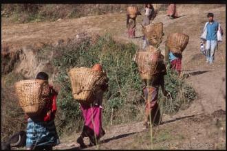 573-Népal-2000