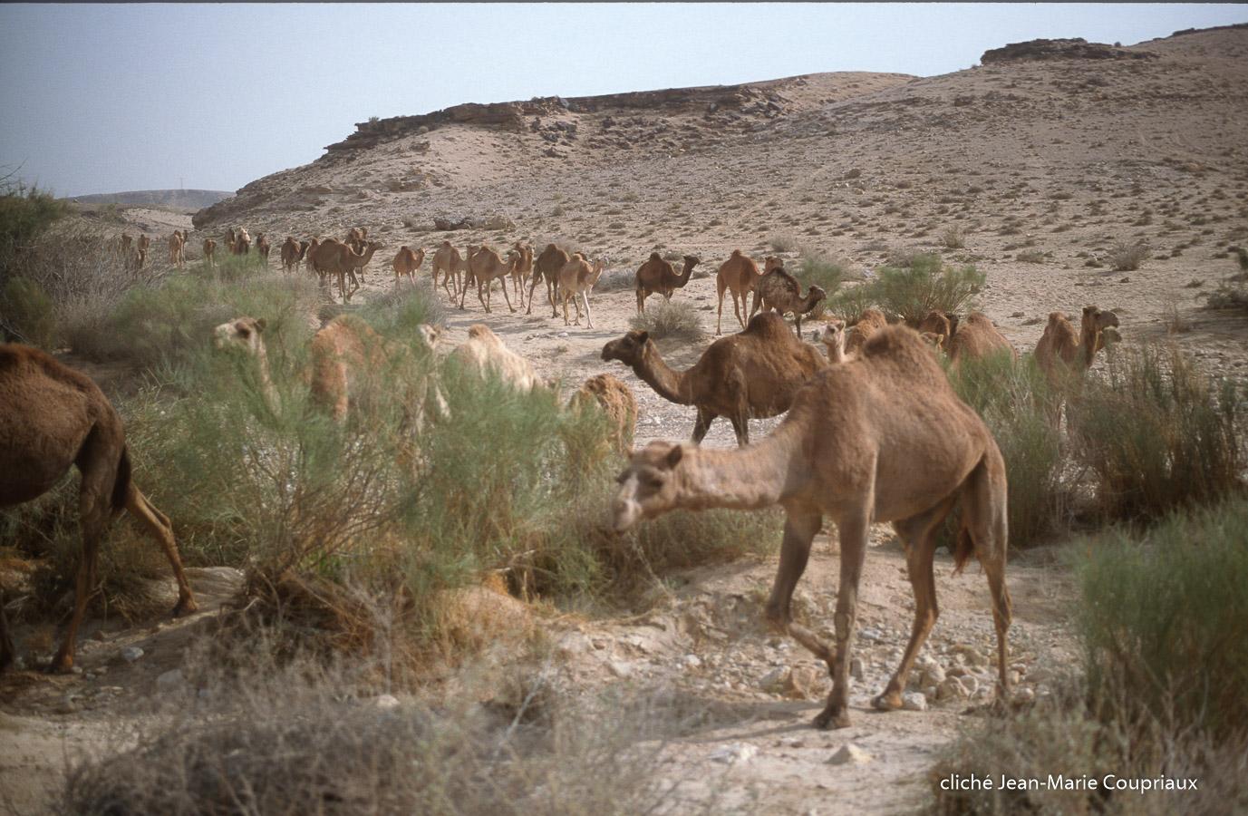 1997_Sinai-Jerusalem-169