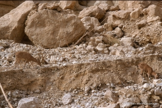 1997_Sinai-Jerusalem-264