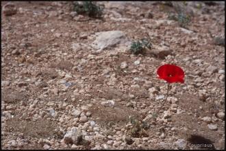 2000_Syrie-19