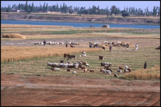585-Syrie-2000